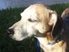 Ft. Lauderdale Pet Care Baxter