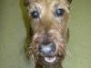 Dog_Walker_Fort_Lauderdale_Casey