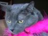 Fort_Lauderdale_Cat_Sitting_Chloe