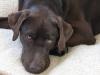Dog-Walker-Fort Lauderdale-Cody