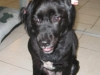 Dog Walker Ft. Lauderdale Dharma