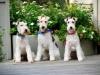 Wilton Manors-Dog Boarding-The happy trio