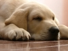 Pet-Sitter-Fort Lauderdale-Cooper