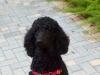Dog_Walker_Pompano_Beach_Gracie