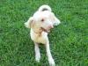 Dog_Walker_Victoria_Park_Hendrix