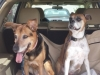 Cage-Free-Dog-Boarding-Kali-Lucy