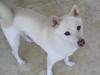 Pet_sitting_Wilton_Manors_Musashi