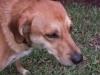 Cageless_Dog_Boarding_Fort_Lauderdale_Otis