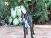 Pet_Sitting_Rio_Vista_Reggie