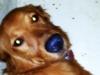Pet_Sitting_Fort_Lauderdale_Rella