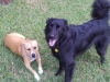 Sasha & Bentley