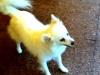 Dog_Walker_Oakland_Park_Tilou