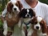 Pet-sitter-fort-lauderdale-trio-jpg