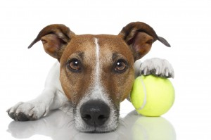 Pet Sitters Fort Lauderale