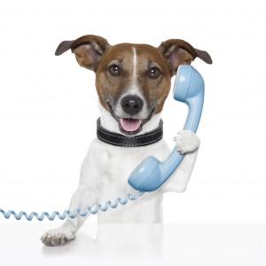 calling a pet sitter last minute