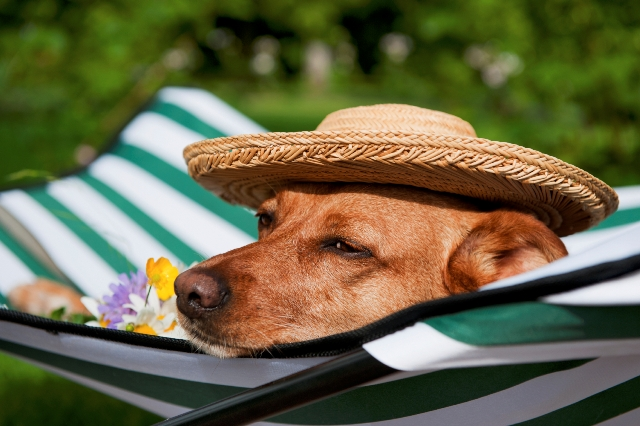 Traveling With Pets - Pet Sitting in Fort Lauderdale ... Relaxing Dogs