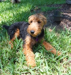 Dog-Boarding-Fort Lauderdale-Molly