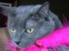 Fort_Lauderdale_Cat_Sitting_Chloe