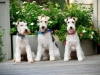 Wilton Manors-Dog Boarding-The happy trio