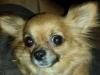 Pet_Sitter_Fort_Lauderdale_Gwen