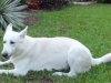 Pet-Sitter-Wilton Manors-Jake
