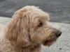 Dog Boarding Ketel