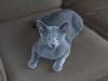 Cat_Sitting_Wilton_Manors_Simon