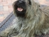 Dog_Boarding_Wilton_Manors_Twister