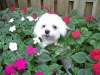 Pet_Sitter_Fort_Lauderdale_Zach