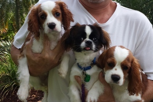 Pet-sitter-fort-lauderdale-trio-jpg