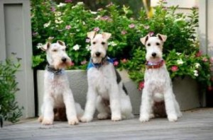 South Florida Pet Sitters Happy Trio
