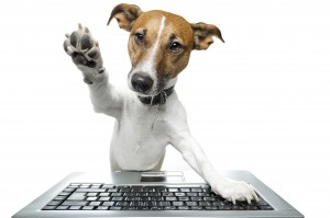 Fort Lauderdale Pet Sitters computer dog