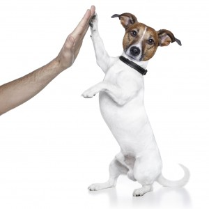 Fort Lauderdale Pet Sitters shake