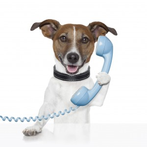 Fort Lauderdale pet sitters phone us