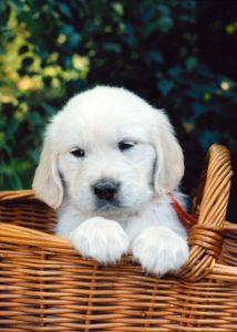 Fort Lauderdale Pet Sitter top 10 dog names