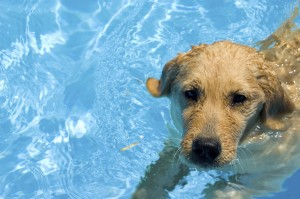 cage free dog boarding swimming dog