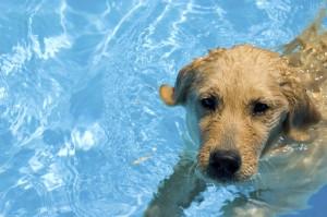 cage free dog boarding swimming dog