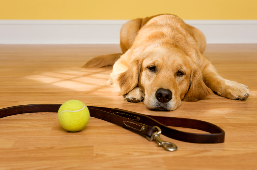 Pet sitter wilton manors pet sitting in fort lauderdale for Puppy dog walker