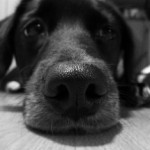 Fort Lauderdale Pet Sitter Home Remedies for Dog Diarrhea