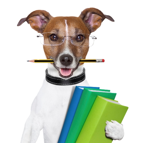 Books for Dog Lovers - Pet Sitting in Fort Lauderdale & West Palm Beach