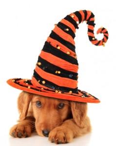 Halloween Pet Safety Fort Lauderdale Petsitter