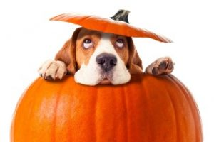 Pumpkin Spice for dogs