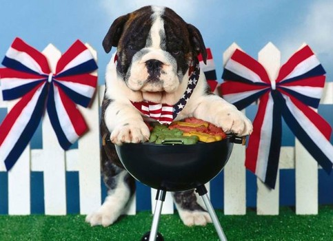 Dog Food Good For Anxiety