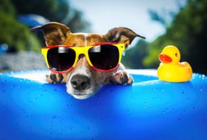 health hazards for dogs